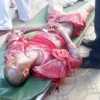 35 killed as soldiers, Islamic sect clash